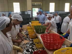 Visita a uma fábrica de conservas em Matosinhos, Conservas Pinhais (20/08/2015)